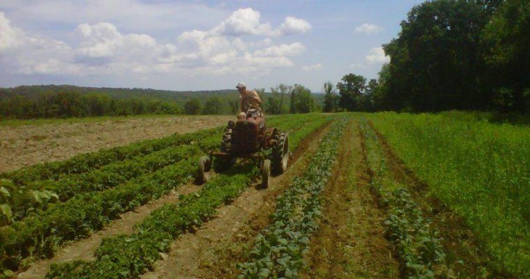 Help Small Farmers